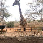 Photo de Giraffe Centre