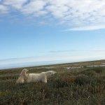 Foto de Nanuk Polar Bear Lodge