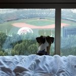 Our dog waiting for a baseball game to start- no luck!