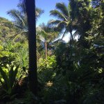 Foto de Hawaii Tropical Botanical Garden