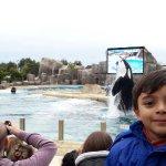 Espectáculo de delfines y orca. Mi nieto y nosotros,lo disfrutamos mucho