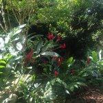 Photo de Le Jardin Du Roi Spice Garden