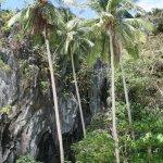 Photo of Entalula Island