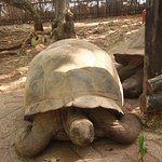 trip to turtles island