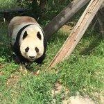 Photo of Kobe City Oji Zoo