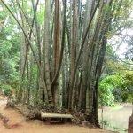 Photo of Udawattekele Sanctuary