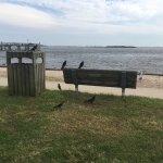 Birds and bench