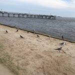 Birds and ocean