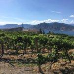Lang Vineyards Foto