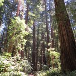 Redwood National & State Park