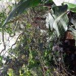 Jungle fever in the heart of Ballito