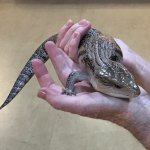 Opportunity to hold reptiles...snakes too!