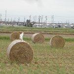 Photo of Nabana no Sato