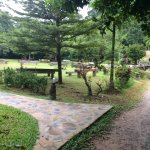 The Cliff & River Jungle Resort Foto