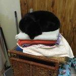towel cat lol most laid back cat I've ever met.....