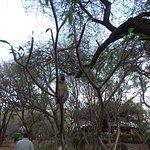 Photo of Amboseli Sopa Lodge