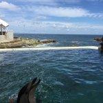 Photo of Kinosaki Marine World