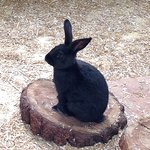 One of the friendly rabbits!
