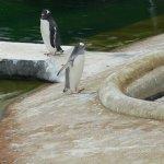 Photo de Edinburgh Zoo