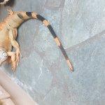 Photo of Aquaworld Aquarium & Reptile Rescue Centre