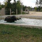 Veszprem Zoo