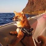 Merci Nico pour avoir initié notre chien à la joie des ballades en mer ! :)