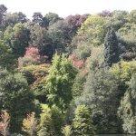 Trees on the hillside 14th September 2017