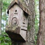 Bird box, or fairy tree-house?  Seen on the wetland walk.