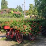 Photo of Luisenpark Mannheim