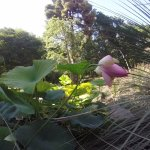 Foto de Orto Botanico