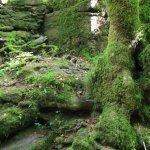Photo of Parque Natural Fragas do Eume