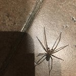 I like spiders but don't know why this one needs to live in our 4th floor bathroom. This place i