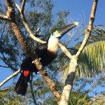 Photo of Corto Maltes Amazonia
