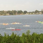 View from guest's room watching a regatta of paddlers on Hilo Bay.