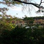 Photo de Beech Forest