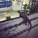 Friendly lizards everywhere
