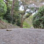 One of the steeper side tracks