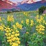 Foto di Yellow Wood Guiding