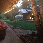 Photo de Kicking Horse Farm