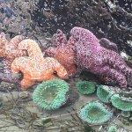 Foto van Pacific Rim National Park