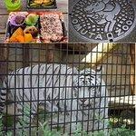 Foto de Omuta City Zoo
