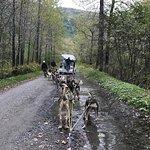 Gold Rush Dog Sled Tours照片