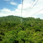 Travelling over treetops on the skyrail
