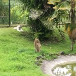 Photo de Panaewa Rainforest Zoo and Gardens