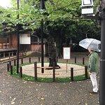 Photo of Yasukuni Shrine