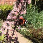 Lots of butterflies in the Ornamental Garden