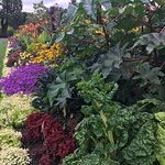 The size and near perfect conditions of the plant beds are just as you see in my picture.