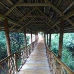 The path way