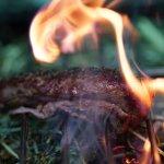In Brennesselsaat flambiertes Lamm