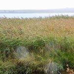 Le lac des Salhiens (jolie balade, à quelques kilomètres)